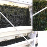 Cooling Tower Microbiological Growth